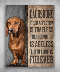 Dachshund Their Affection Is Timeless Their Love Is Forever