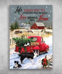 Border Collie Life Takes You To Unexpected Places Merry Christmas