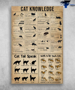 Cat Knowledge Ways To Pet Your Cat