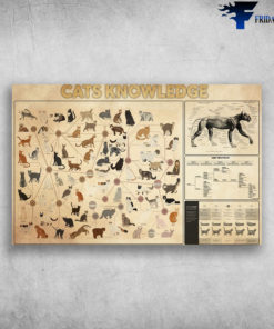 Cats Knowledge All About Cats What Shape Is Your Cat
