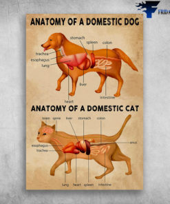 Anatomy Of A Domestic Dog And Anatomy Of A Domestic Cat