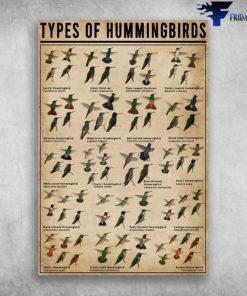 Types Of Hummingbirds Lucifer Hummingbird Calothorax Lucifer