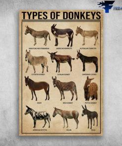 Types Of Donkeys Miniature Mediterranean American Mammoth