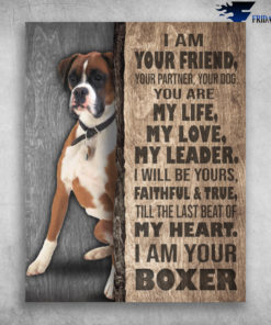 I Am Your Boxer I Am Your Friend Till The Last Beat Of My Heart