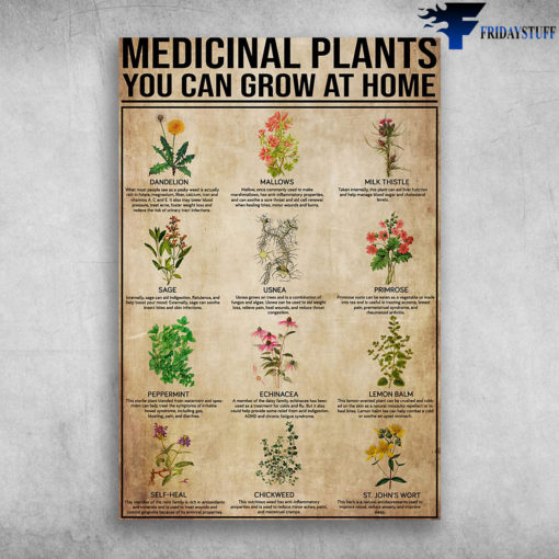 Medicinal Plants You Can Grow At Home Dandelion Mallows Milk Thistle