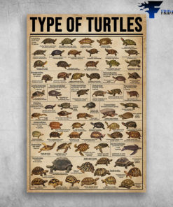 Type Of Turtle Western Pond Turtle Actinemys Marmorata