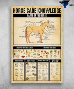 Horse Care Knowledge Parts Of The Horse