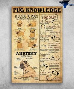 Pug Knowledge A Guide To Pugs Anatomy