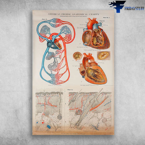 Structure Of The Circulatory System On The Human Body