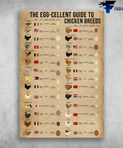 The Egg-Cellent Guide To Chicken Breeds
