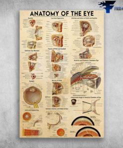Anatomy Of The Eye - Eyelids, Lacrimal Apparatus, Arter And Veins Of Orbit And Eyelids, Extrinsic Eye Muscles, Fascia Of Prbit And Eyeball, Eyeball, Nerves Of Orbit, Anterior And Posterior Chambers Eye